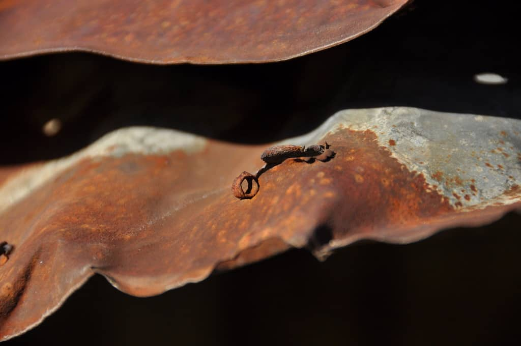 trucioli di legno in acqua profumano